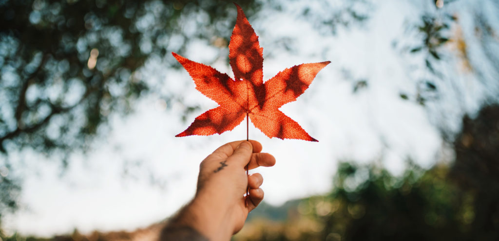 Person's hand holds a red maple leaf up to the sky.